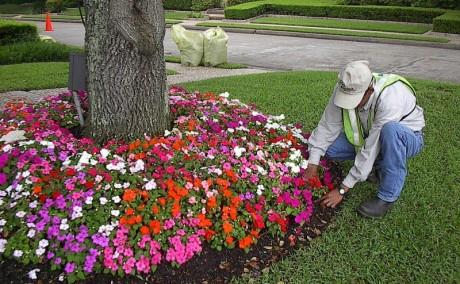 Floriculture 2