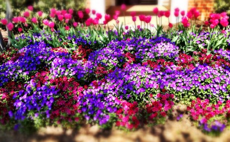 Floriculture 3