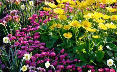 Floriculture 6
