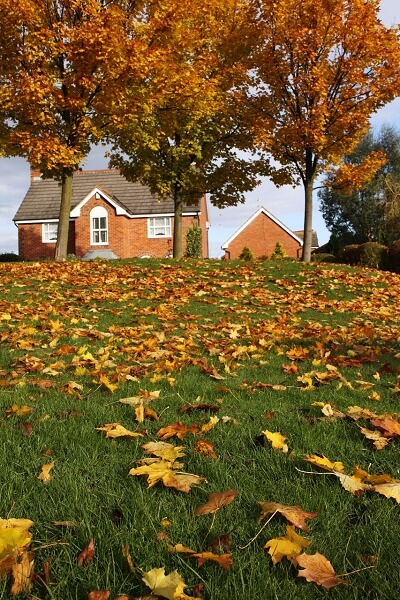 Why You Should Always Rake Your Leaves