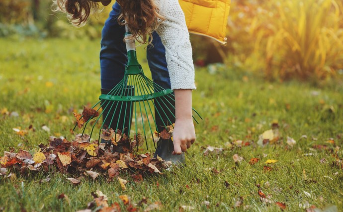 Tips for Fall Lawn Maintenance