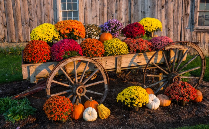 Adding Color to Your Fall Landscape