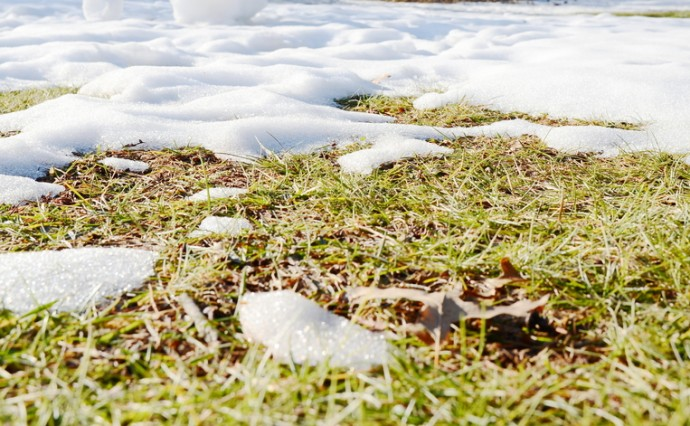 Protecting Your Landscape in the Winter
