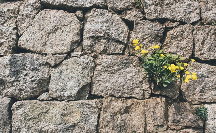 Different Types of Walls in Landscaping